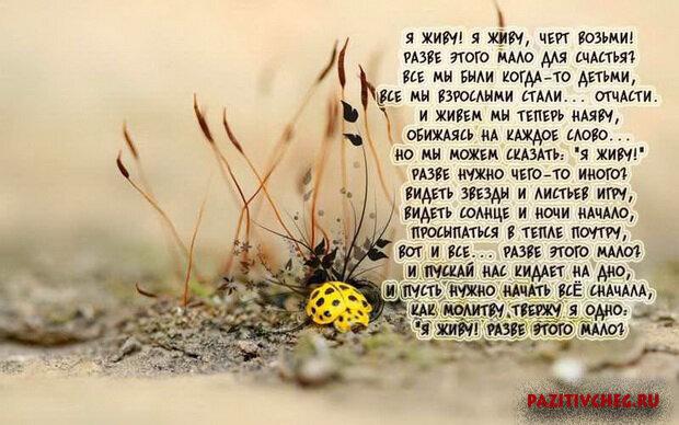 Короткие стихи в картинках о смысле жизни