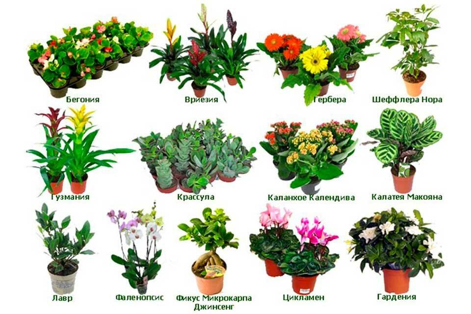 Картинки названия растений