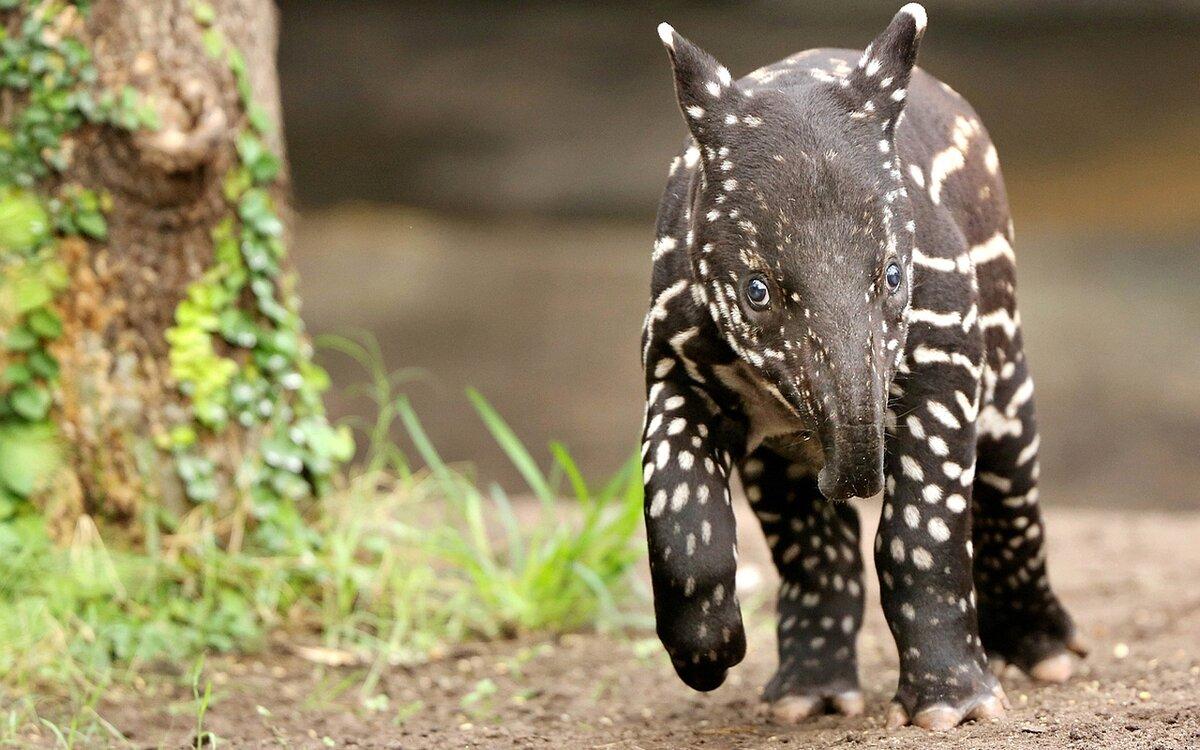 Название редких животных с картинками