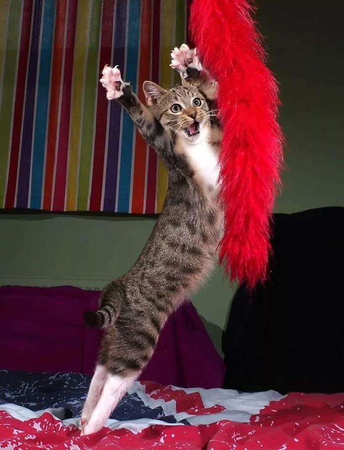 Прикольные картинки танцующих котов
