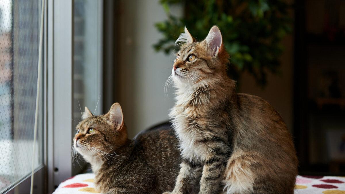 кошки фото красивые и смешные большая поганка
