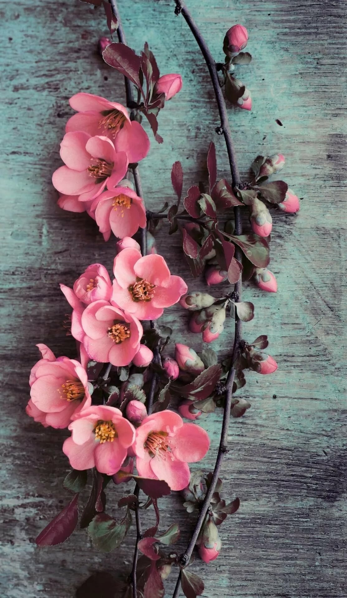 Картинки на айфон красивые цветы