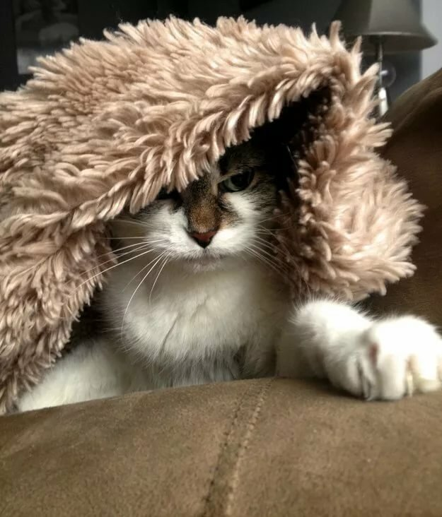 16 Adorable Cats Who Will Make You Feel All Cozy Inside