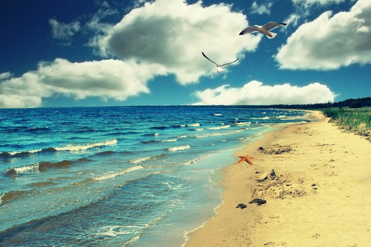 темно-красные, пляж океан картинки на телефон баланса