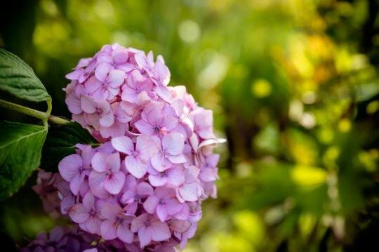 """8 """"цветочных"""" сезонов Японии · Блог YouTravel.Me"""