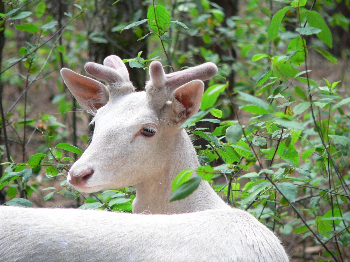 для защиты фото животных альбиносов роспись