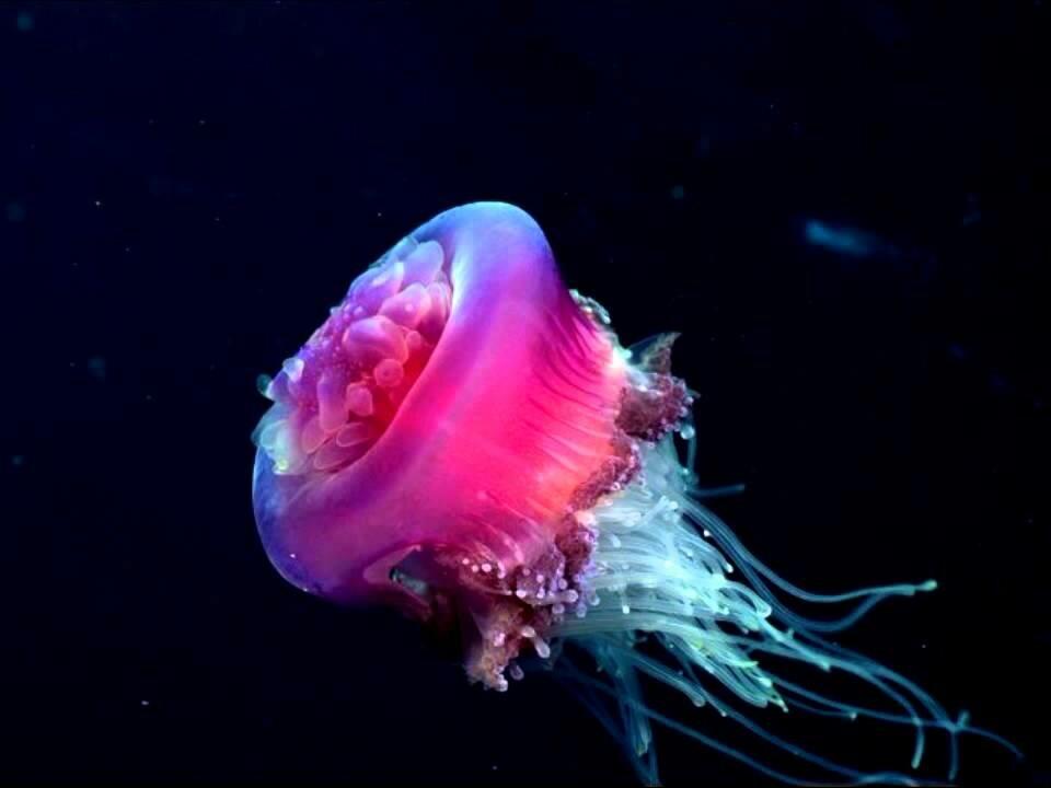 медузы в хорватии фото нашей планете еще