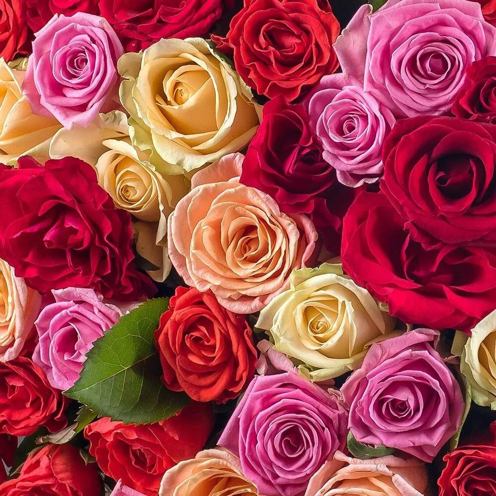 Картинки розы букеты все цвета