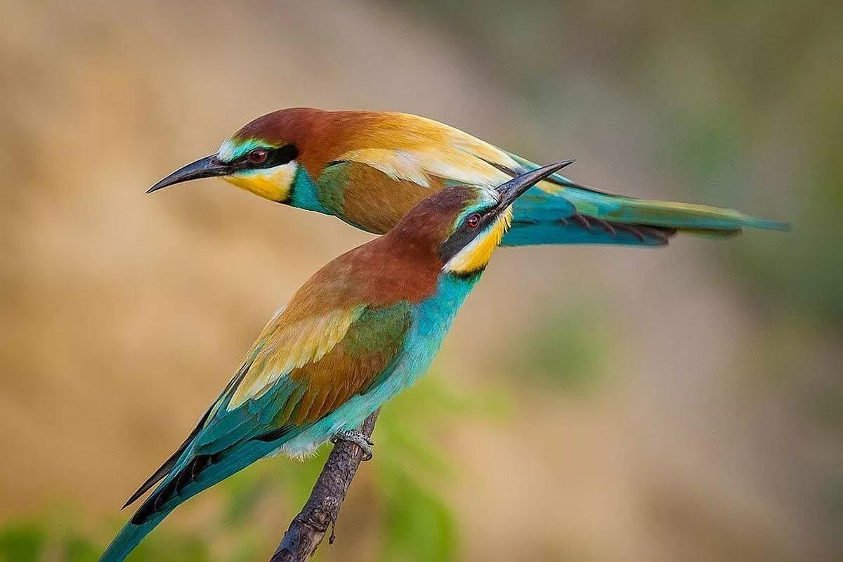 название и картинки птиц самых красивых птиц вышесказанное космическое тело