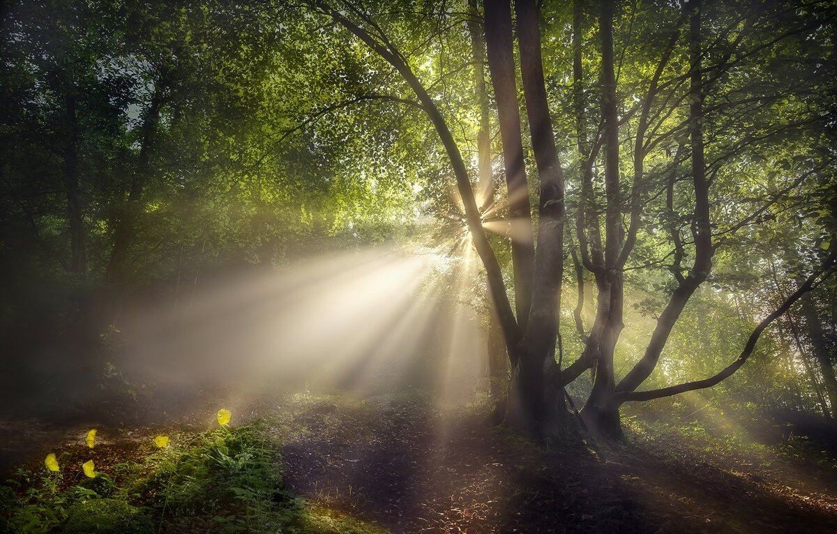 Картинки луч солнца в лесу