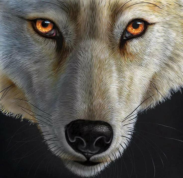 Картинки белова волка одиночки аниме на статус ватсап