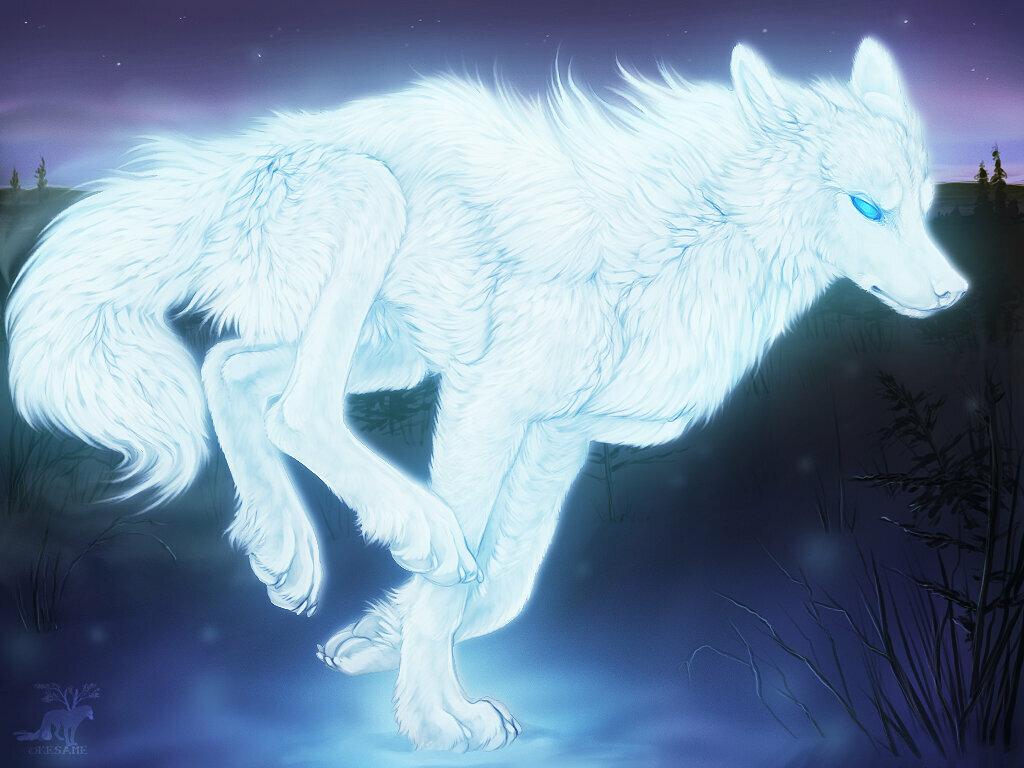 картинка черного волка и белой волчицы интересные новости мира