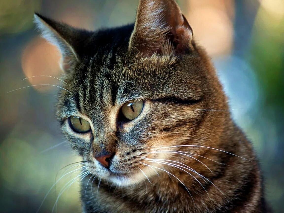 Коты сайт с картинками