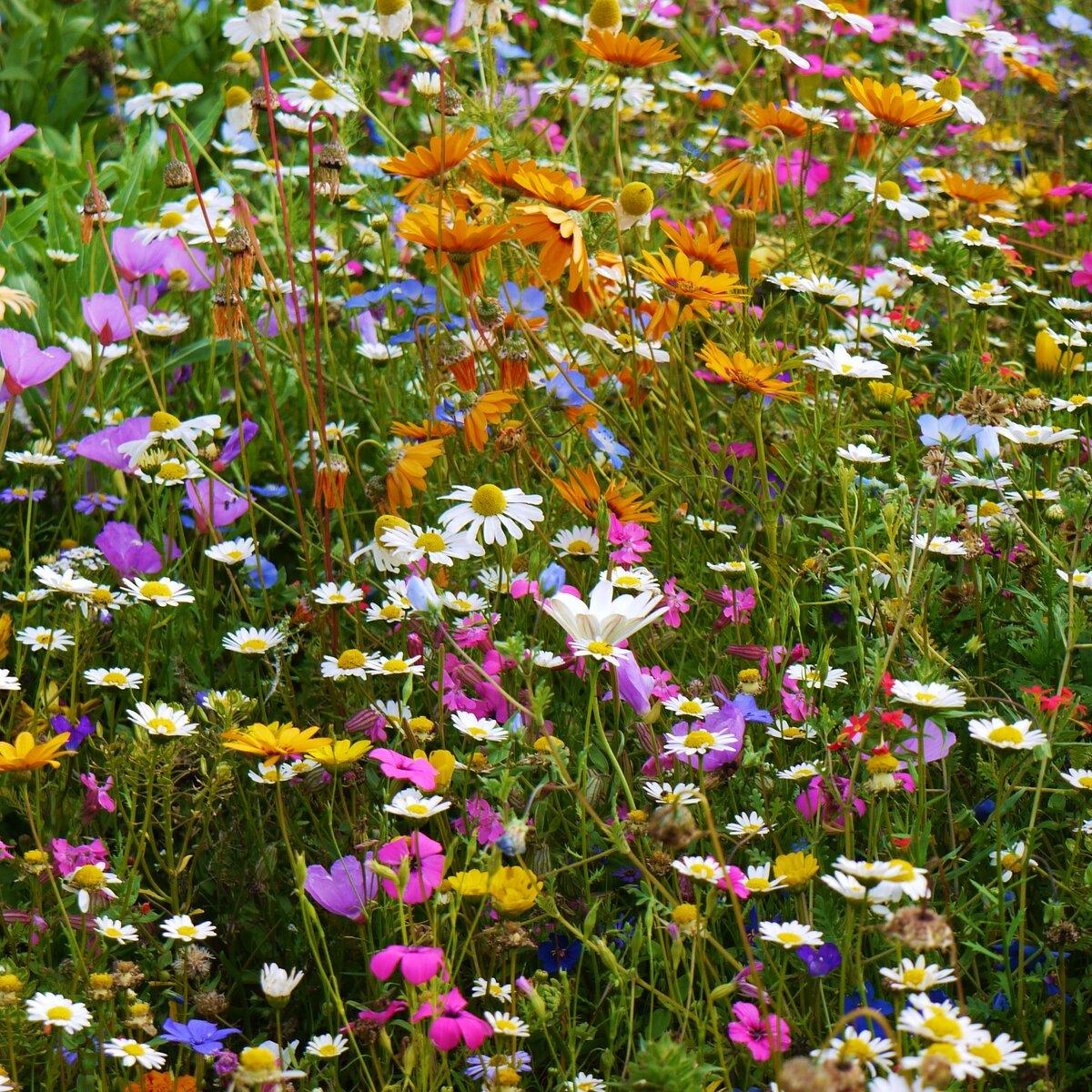 цветочный газон в картинках первичных