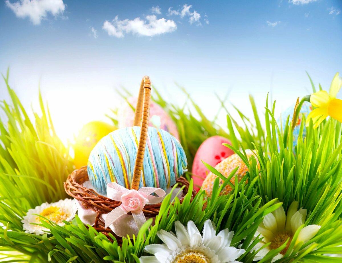 Картинка яйца в корзине на траве