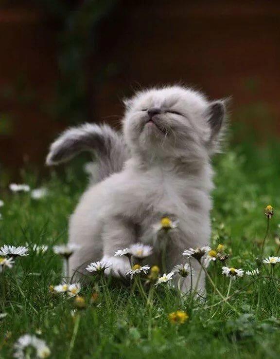 """🌺 🌾 Olgа 🌾 🌺 в Твиттере: """"Надо всегда быть радостным...Если радость кончается - ищи, в чем ошибся."""