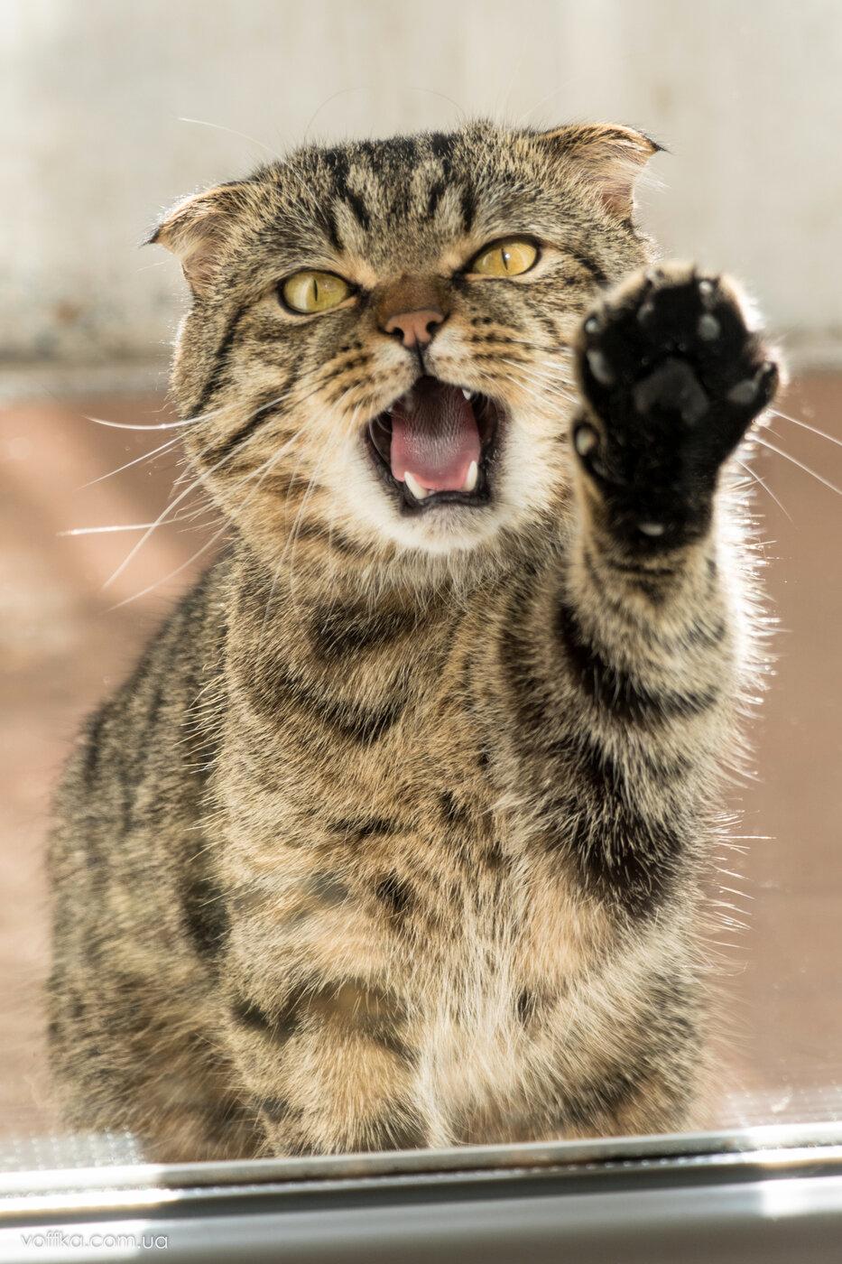 прикольные картинки злых котов