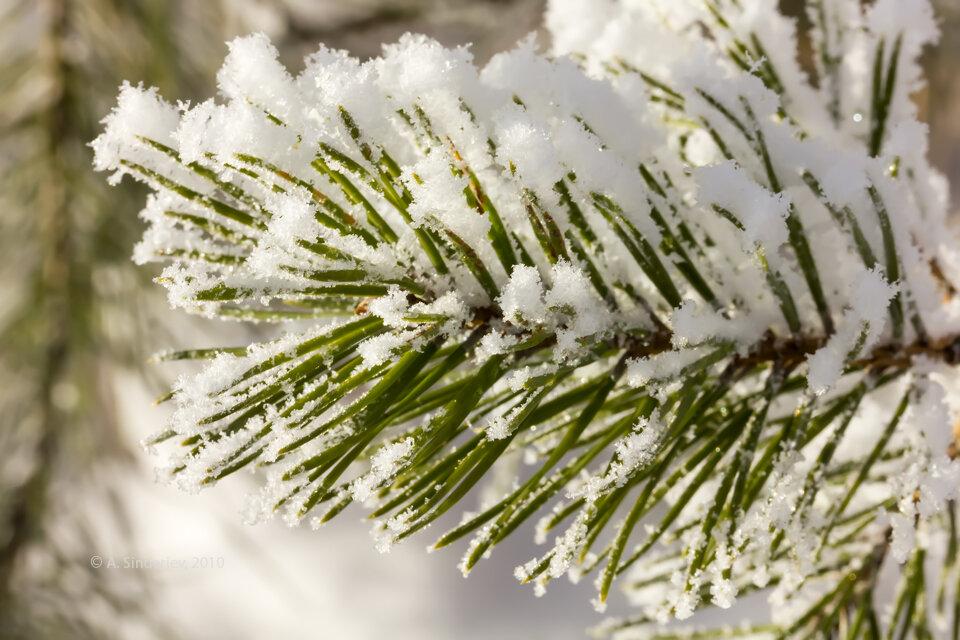 такой веточка в снегу фото уникальный