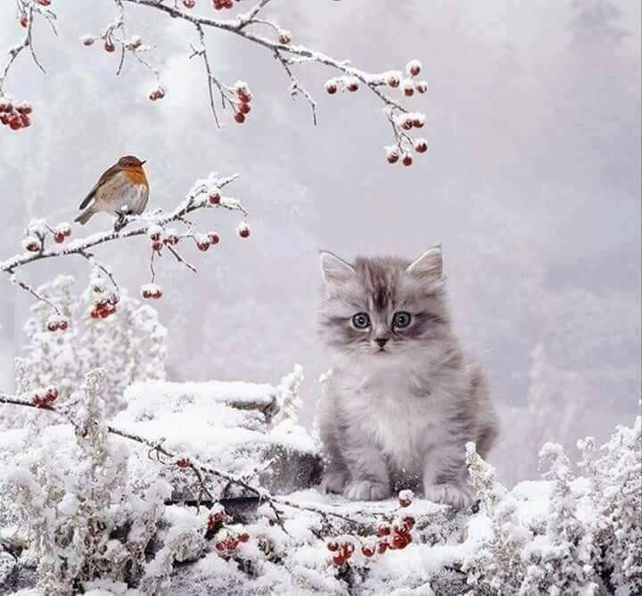 Картинки с добрым утром с котиками в снегу