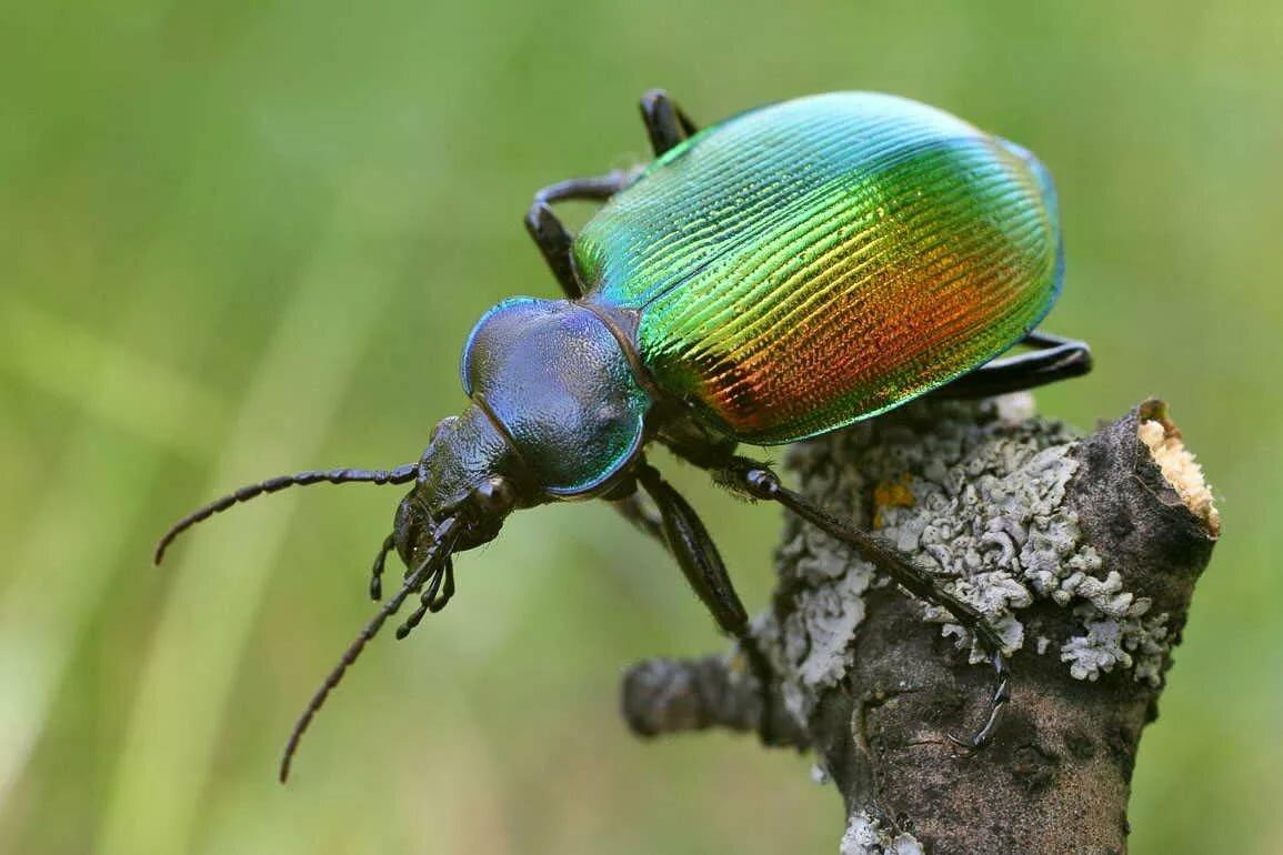 статья, жуки с названием крупных животных одно