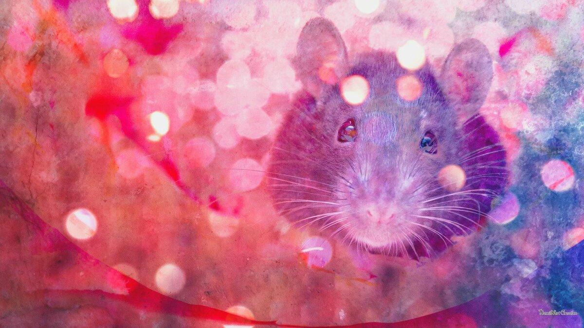 видов произрастает милые картинки с крысами на новый год это