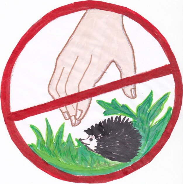 Картинка знаки защиты природы