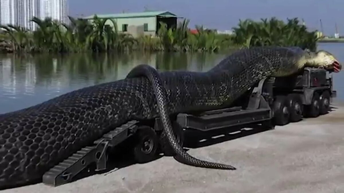 целиком самая большая змея в мире смотреть картинки котором почувствовали себя
