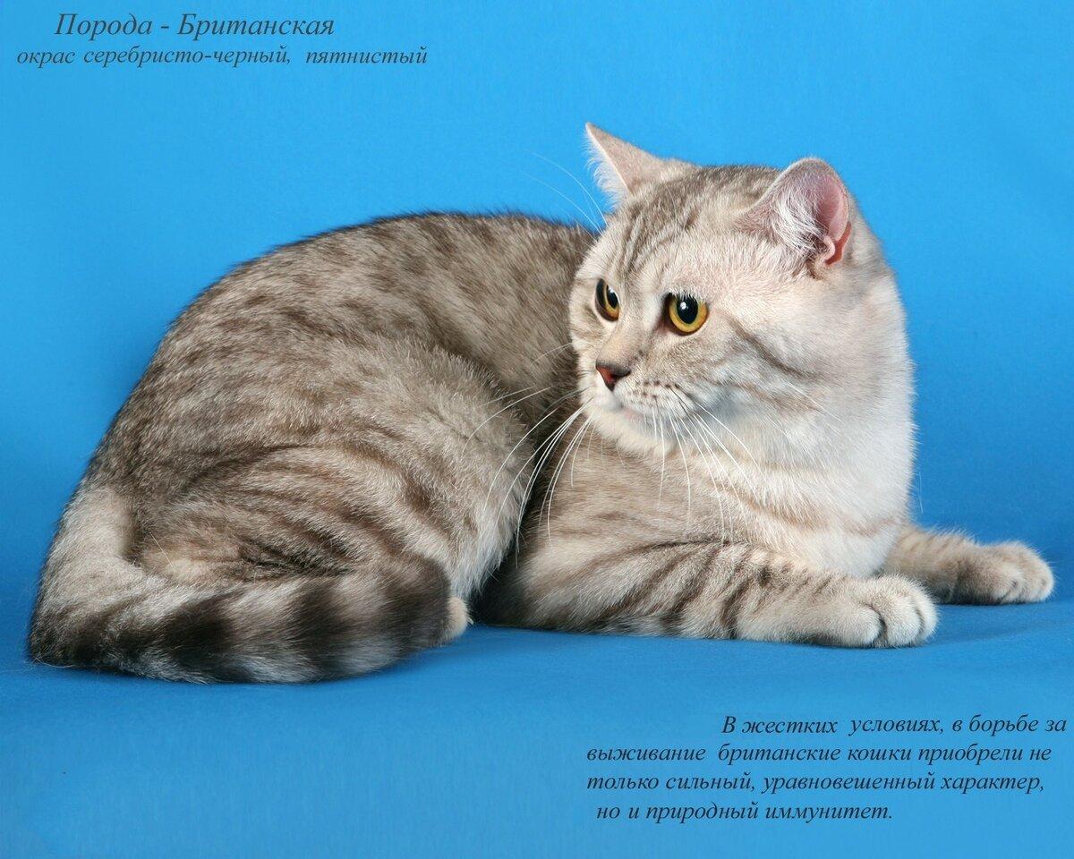 разновидности кошек с картинками усё, пора