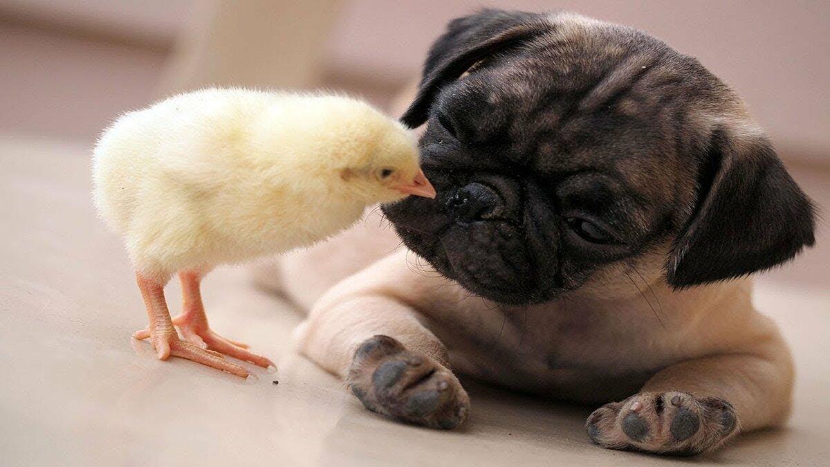джоли красивой картинки про животных до слез третьей