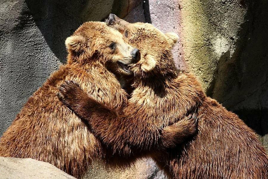 Картинка обнимашки с медвежонком