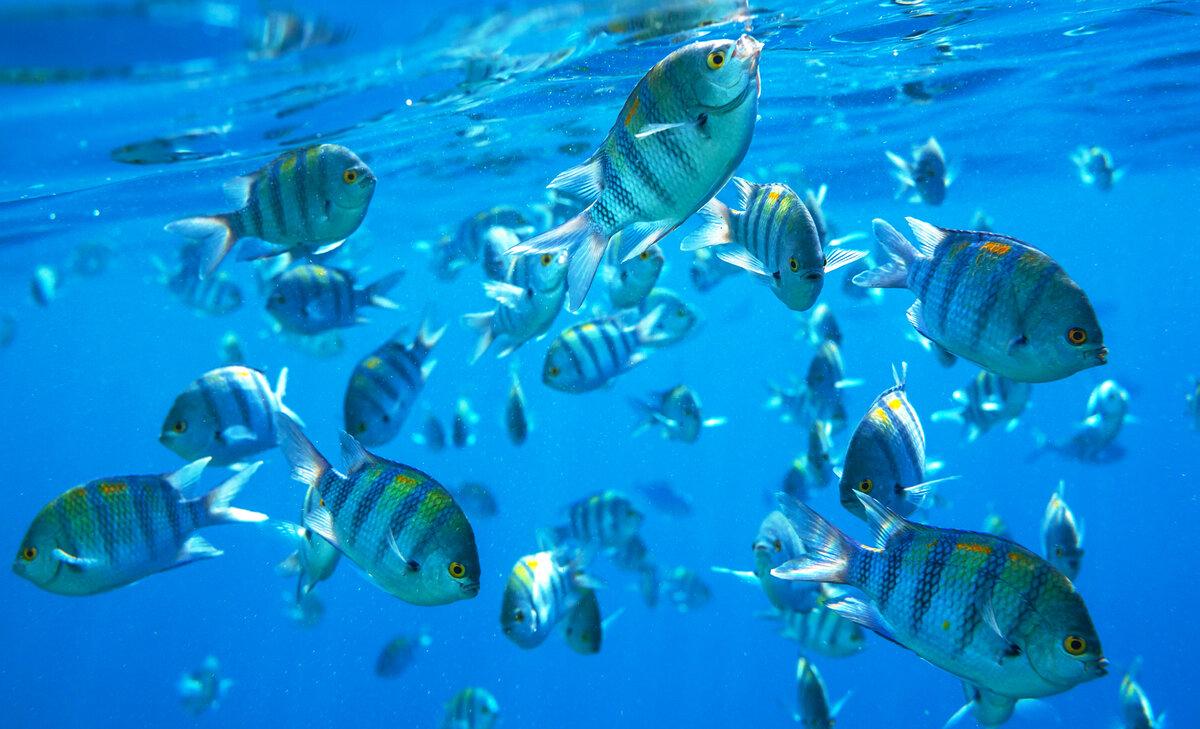новые картинки с рыбками да, значит, правда