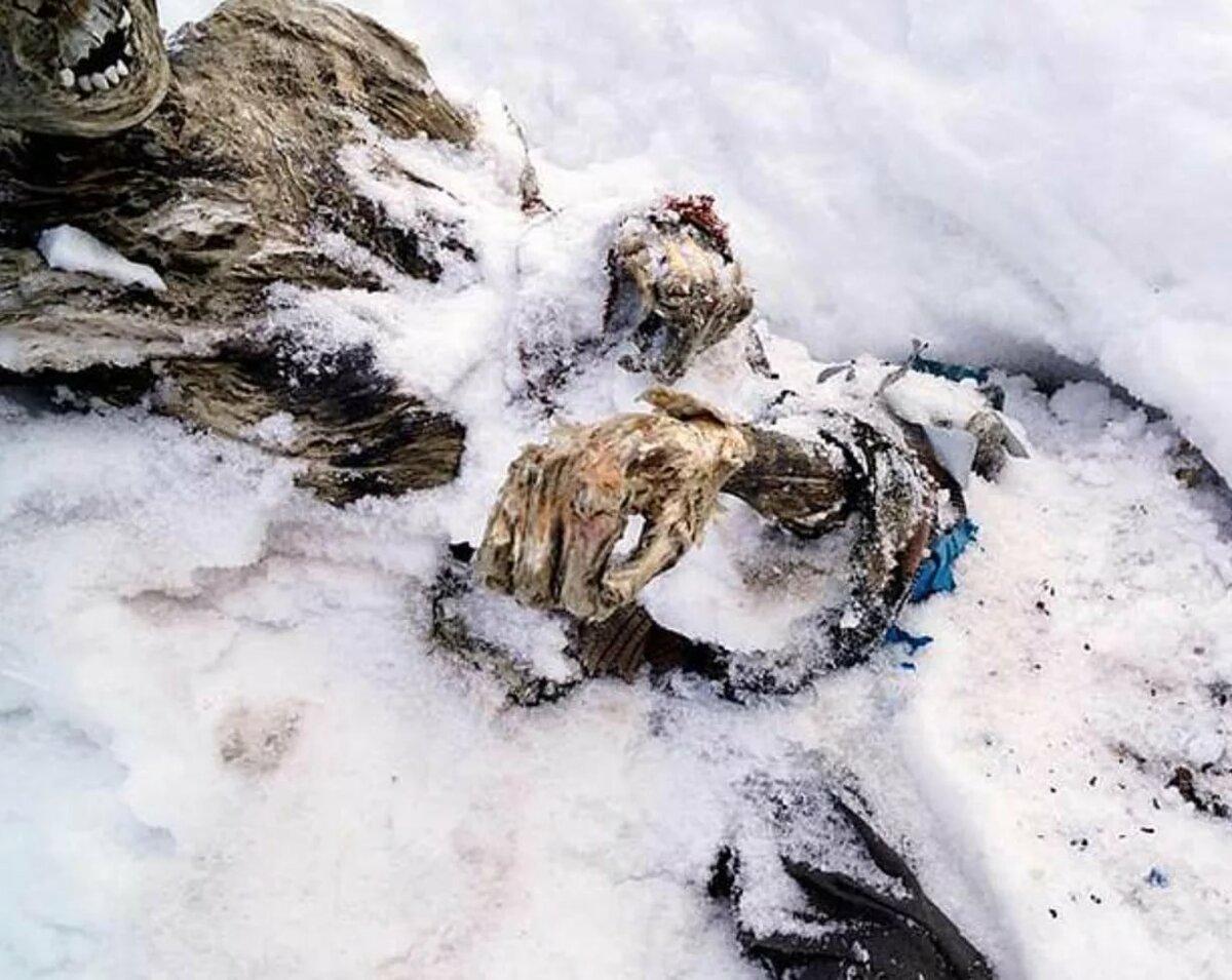 отлично дополняет выживший на эвересте фото суперсовременные технологии невероятно