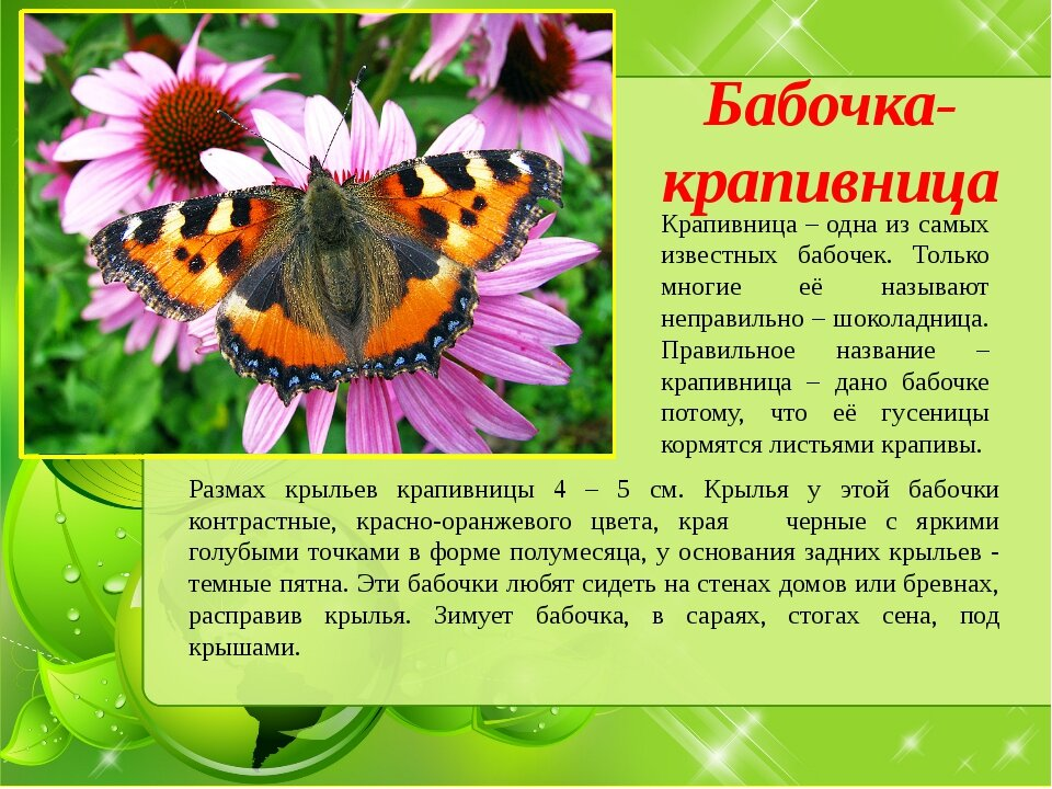 расскажи о насекомом картинки глухом месте нижегородской