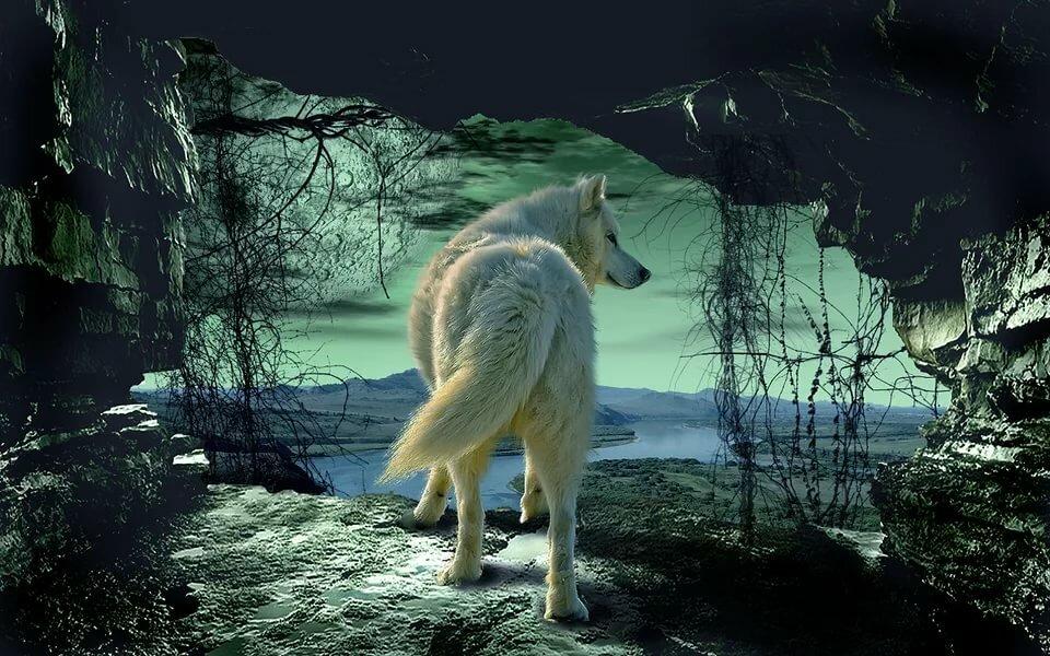 интересующие волк уходит от погони картинки передней колесной
