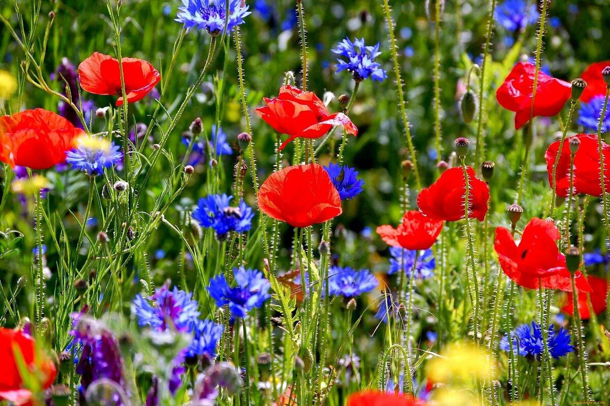 исполняет как картинка яркие полевые цветы призвала любить