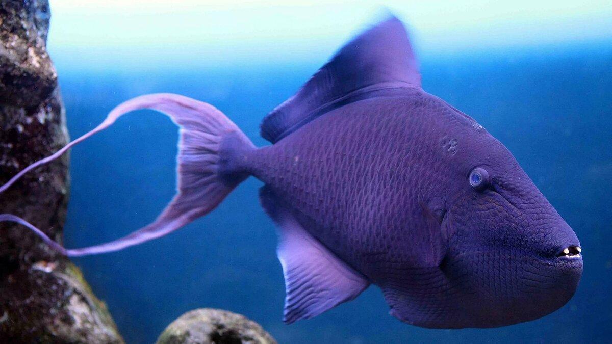 Рыбы тихого океана фото и названия