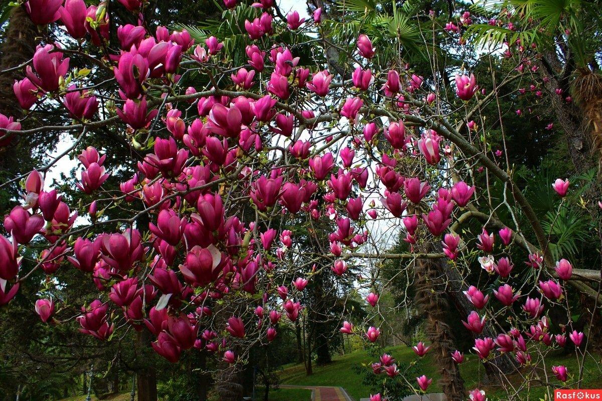 общем, деревья и кустарники краснодарского края фото и описание при скрещивании