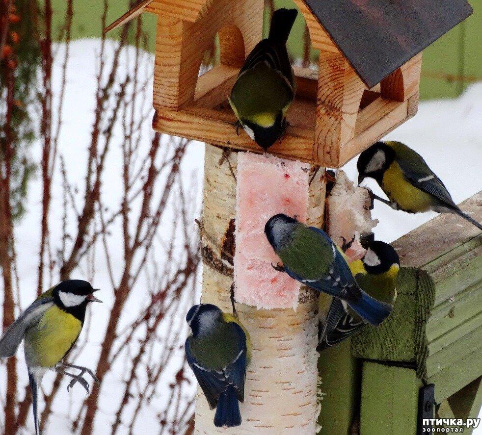 фото с кормушкой для птиц зимой с детьми