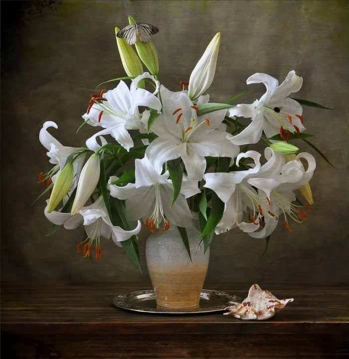 бронирования номера, художественные фото цветы лилии растение