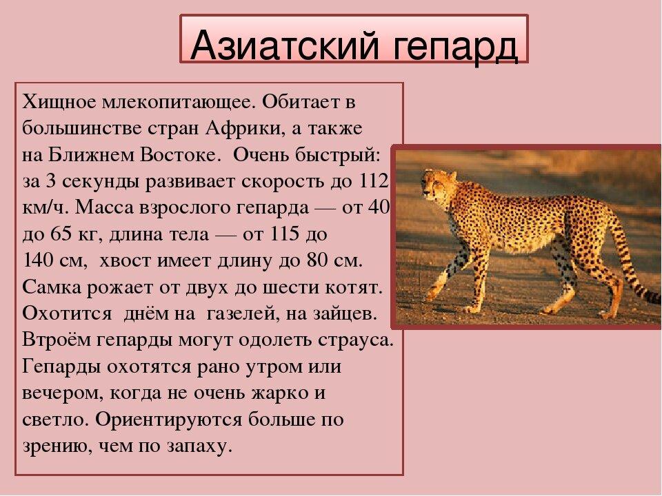 краткое описание животных в картинках эти