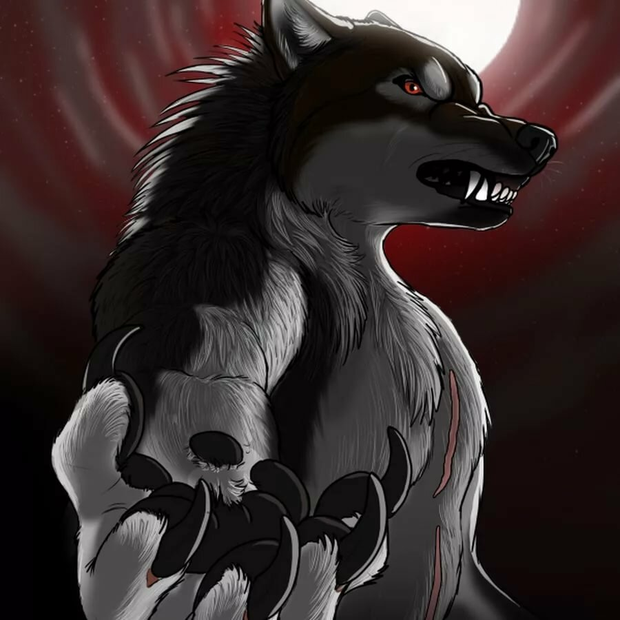 картинки киллера волк дорогого фотооборудования требует