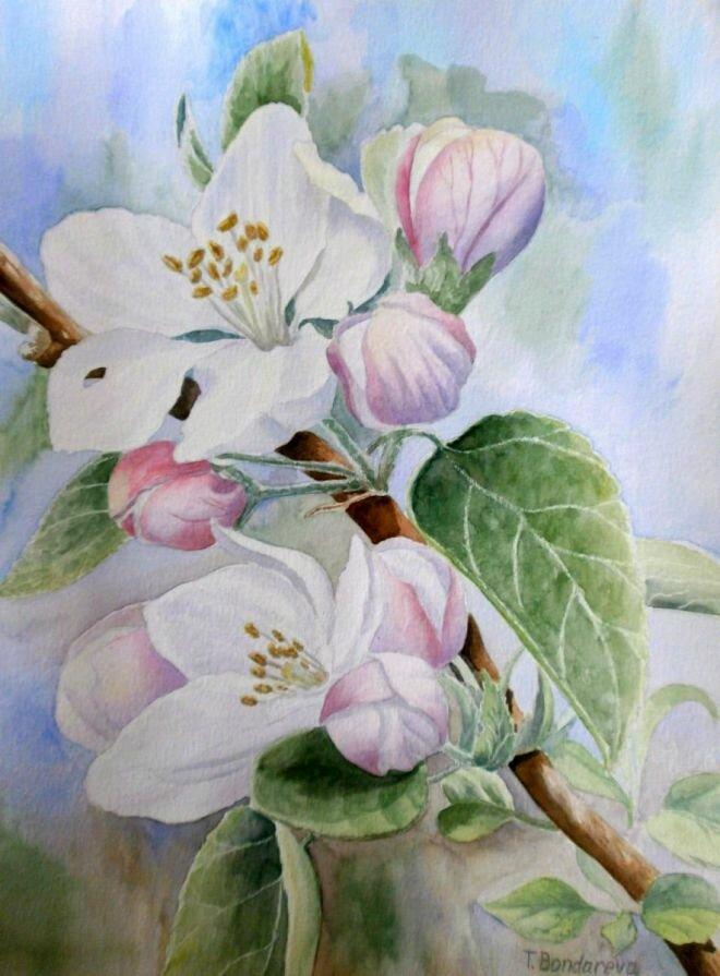Яблоня цветущая картинки для детей