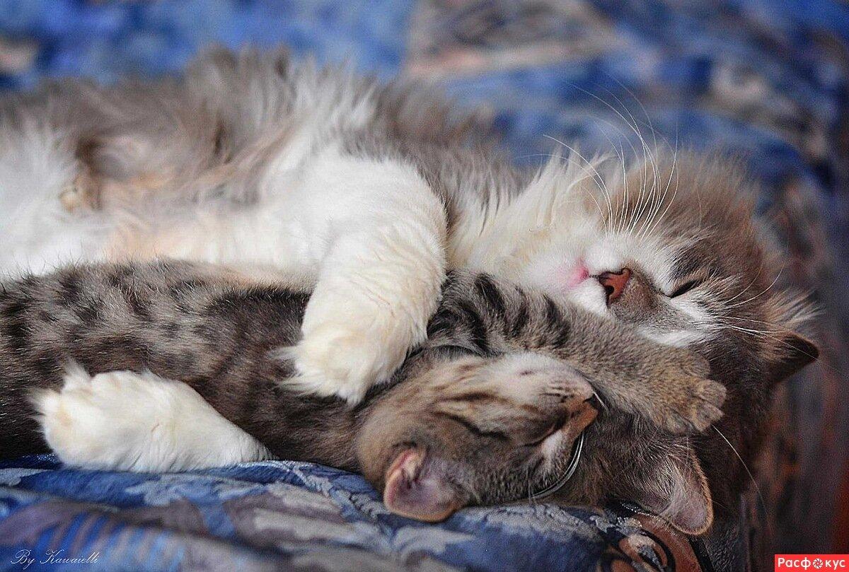 котята спят в обнимку фото советская российская музыкальная