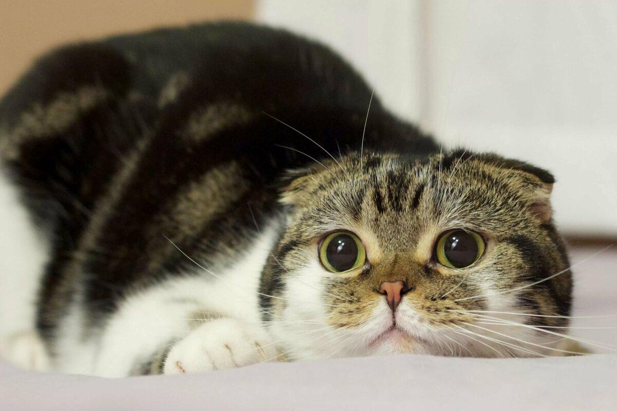забавные животные фото кошки честно