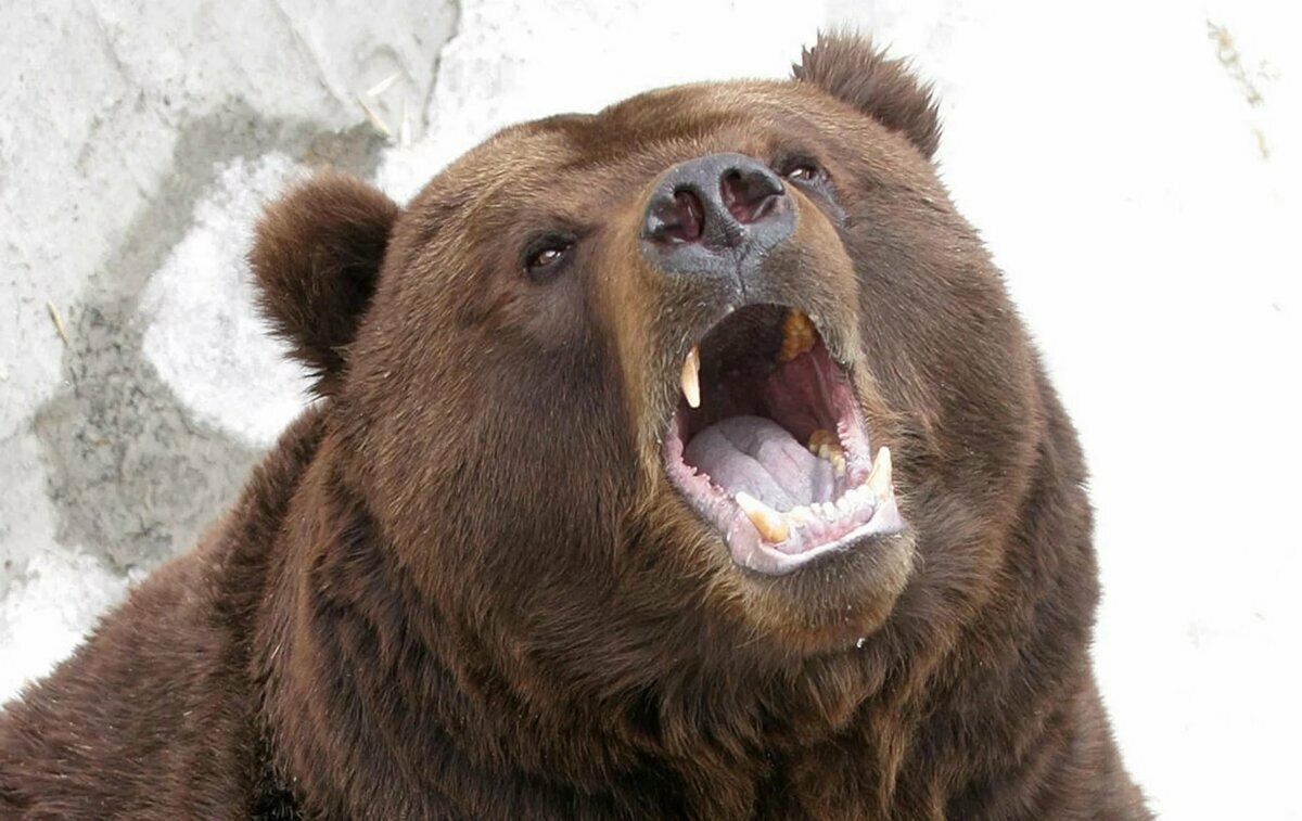 Крым беляус медведево фото все