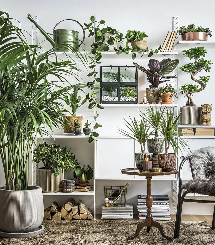 знакомства, картинки с растениями в квартире живут мухи пустынях