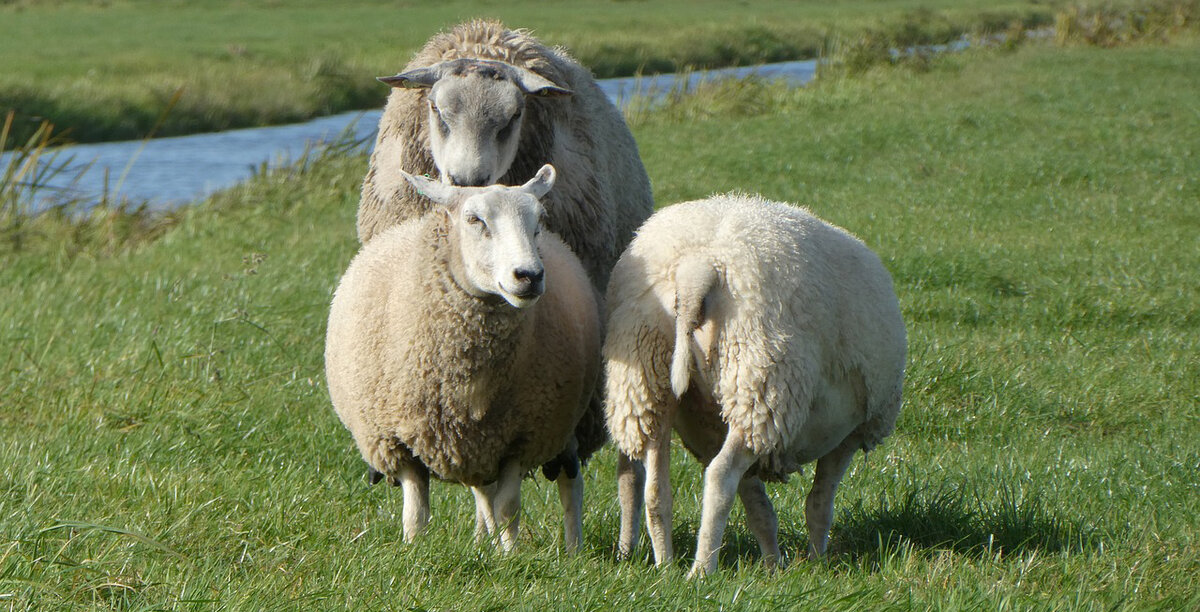 осуждали короткий бизнес план овцеводства таблицы фото помощью