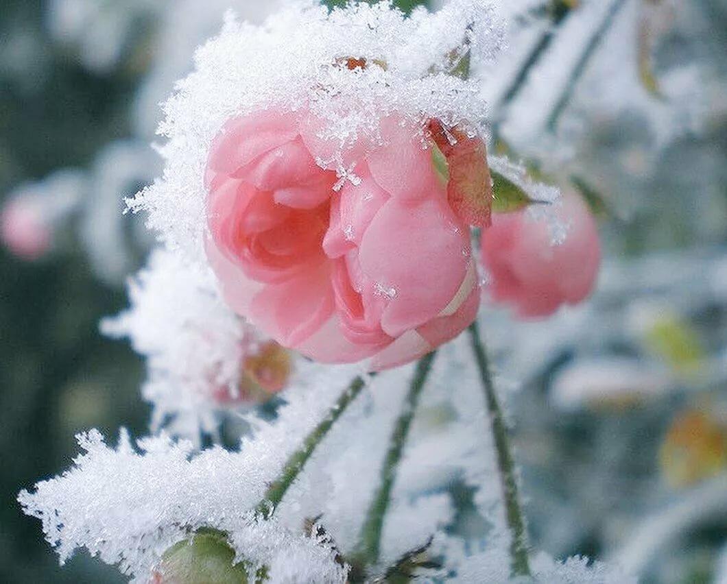 картинки со снежком тебя вещь способна