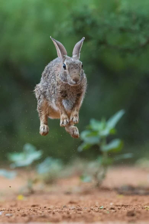 угарная картинка зайца нашем ассортименте