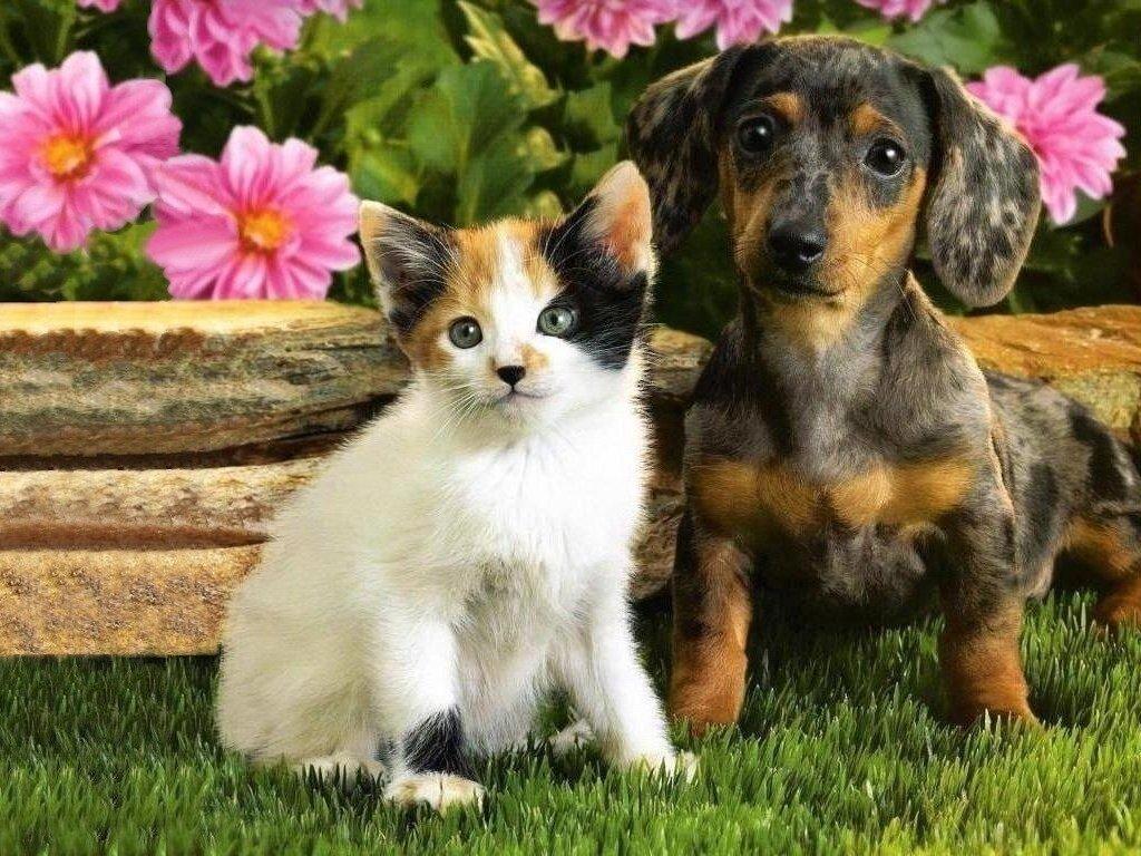 котенок и щенок картинки сердечки над головой